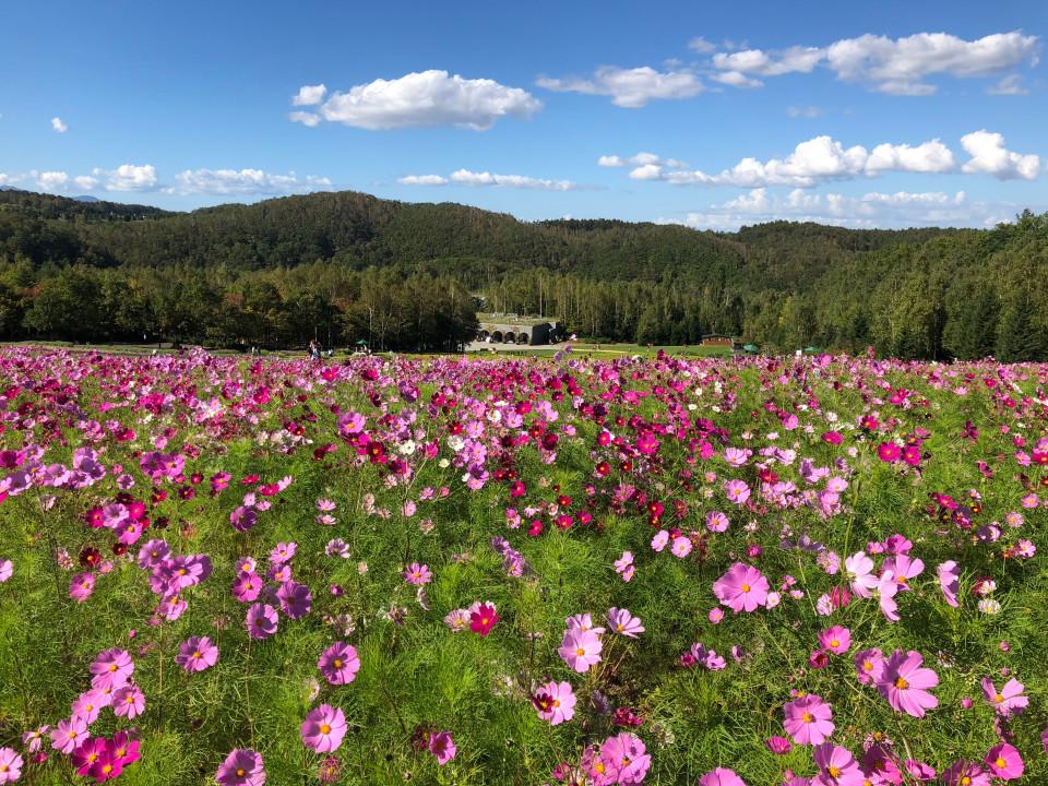hokkaido-190715-Takino Suzuran Hillside National Park