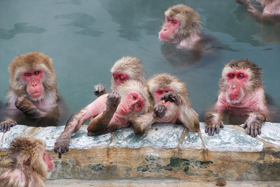 01 monkey_R